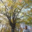 ブナの大木と小島さん