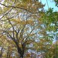 ブナの森の御神木