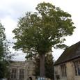 教会の前には大樹が