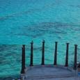 カリブ海とペリカン
