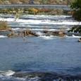 ナイアガラ川上流を観る