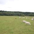 南ボヘミヤの牧草地