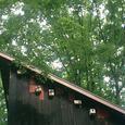 巣箱とどんぐりの木