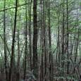 九寨溝 珍珠灘瀑布付近の森