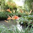 モネの庭園