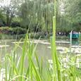 雑然とした草むらと池