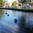 鴨がいる川