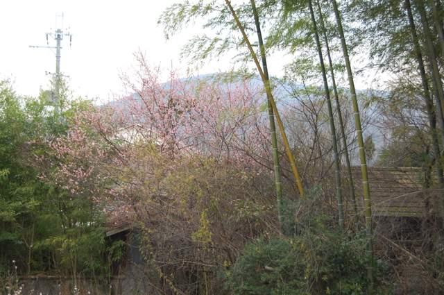 茶臼山古墳近くより三輪山を望