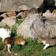 遺跡のノラ猫4匹