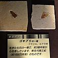 3億年前のゴキブリ