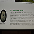 翡翠の大珠(たいしゅ)