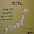 日本の翡翠
