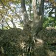 頂上の岩の上に根を張る木