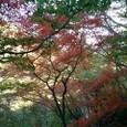 紅葉が綺麗だ