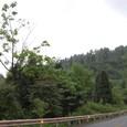 高温多湿で森が茂る