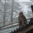 登山路のお店の屋根の猿
