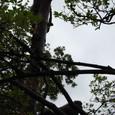 猿の木のぼり