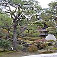 特別史跡 夢窓疎石の苔寺を模した庭