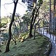 銀閣裏山の庭 苔寺です
