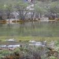 黄龍 五彩池 下流域