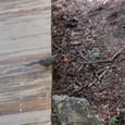 尾っぽの長い鳥でした