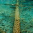 五花海 水中の大木