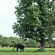 宮殿内の象さん