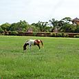 宮殿内に馬がいました