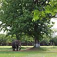 象と宮殿の戦火を免れた巨木