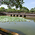 左右の池と蓮