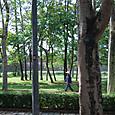 宮殿の外の林