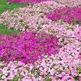 草花の絨毯