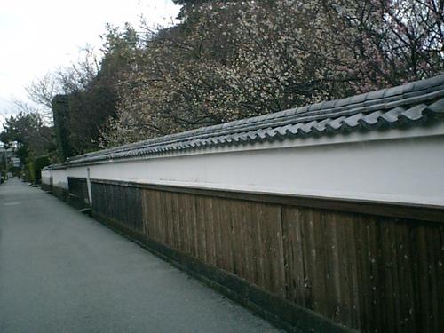 土塀と見事な梅