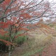 桜の季節もよさそうです