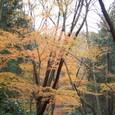 静寂の鎌倉古道