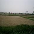 田圃とお墓