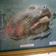 亀捕獲時の顔