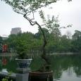 盆栽とホアンキエム湖