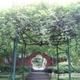 五弁の花模様と庭園