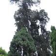古木 巨木が茂る