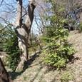 宝莱山古墳後円部