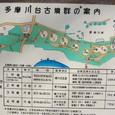 多摩川台古墳群案内図