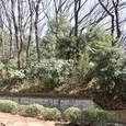 亀甲山(かめのこやま)古墳前方部