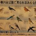 多摩川台公園の野鳥