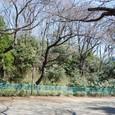 亀甲山(かめのこやま)古墳後円部