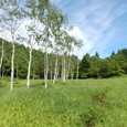 入笠湿原の白樺と白い雲