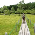 大阿原湿原 木道を歩く