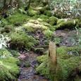 湿原に注ぎこむ小川