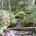 湿原を囲む森
