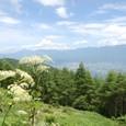 シシウドと八ヶ岳連峰